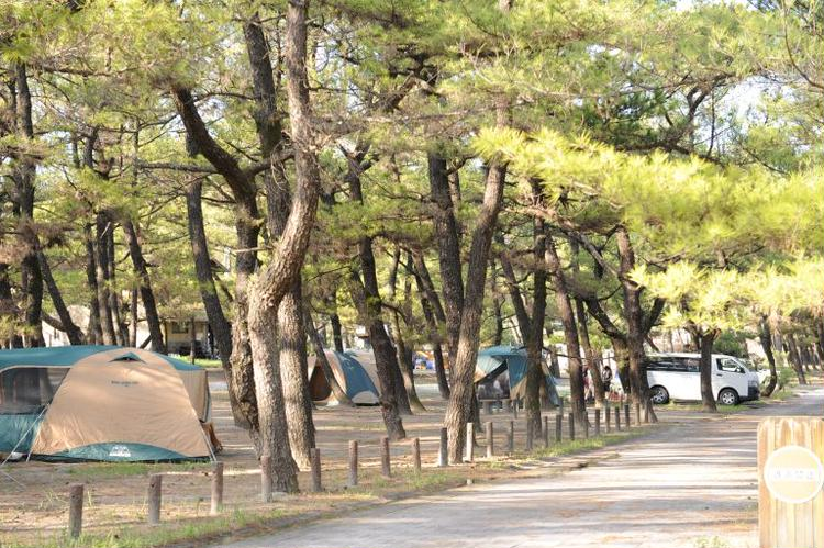 くにの松原キャンプ場(救仁の松原)