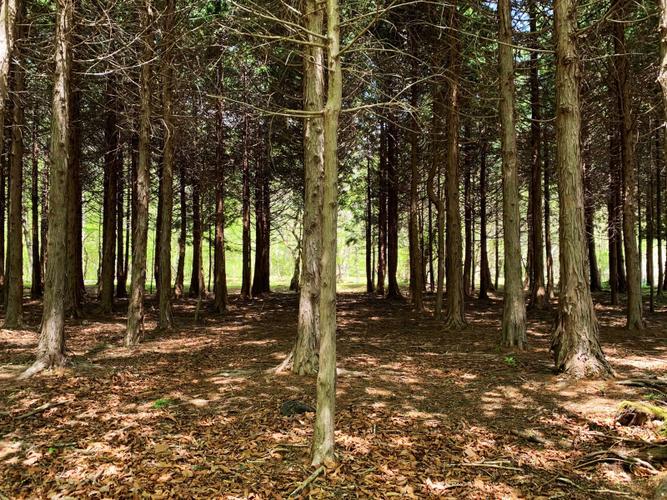 森/林フリーサイト