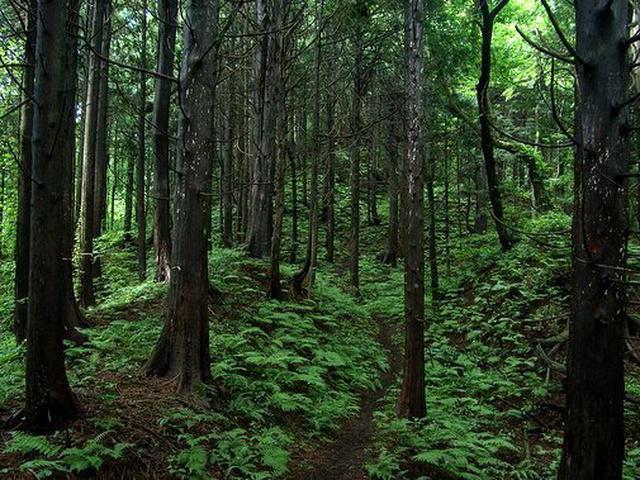 厚沢部町土橋自然観察教育林・レクの森